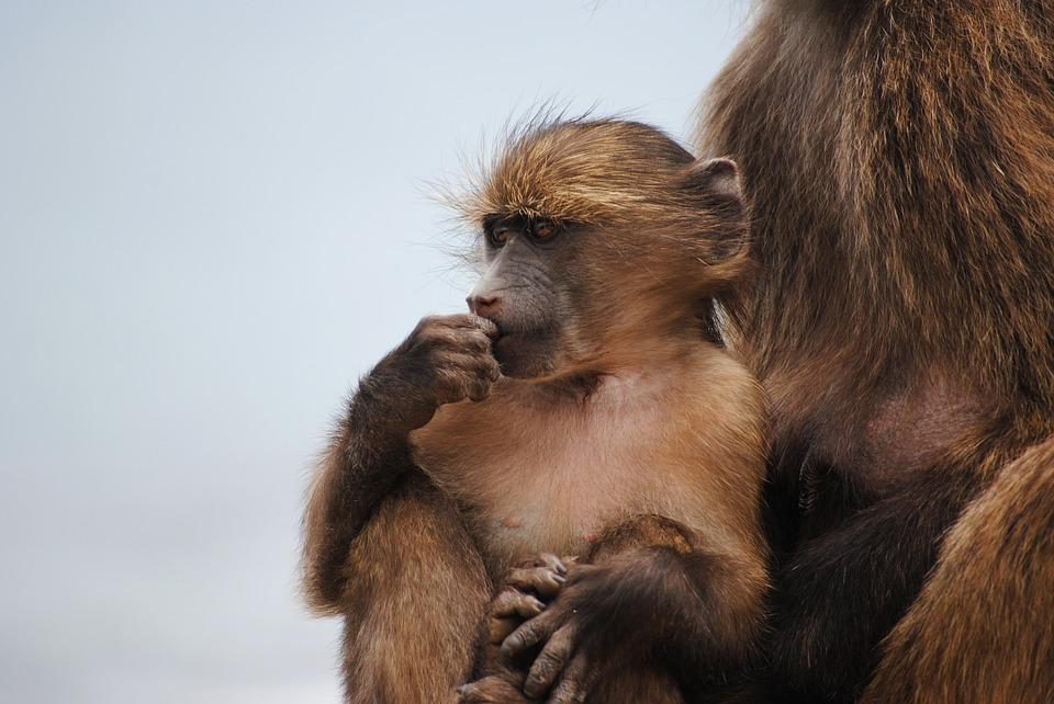 Bambina Mowgli, una storia che diventa realtà: ritrovata in una foresta