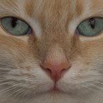 Gentil gatto
