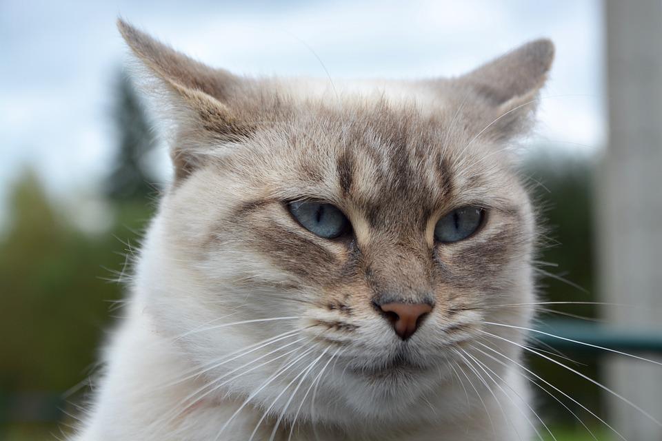 Lavare il gatto prodotti specifici: perché è importante l'uso di detergenti per animali