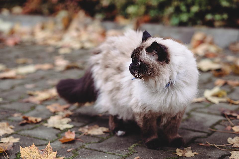 Lavare il gatto quando: ecco i casi in cui è possibile