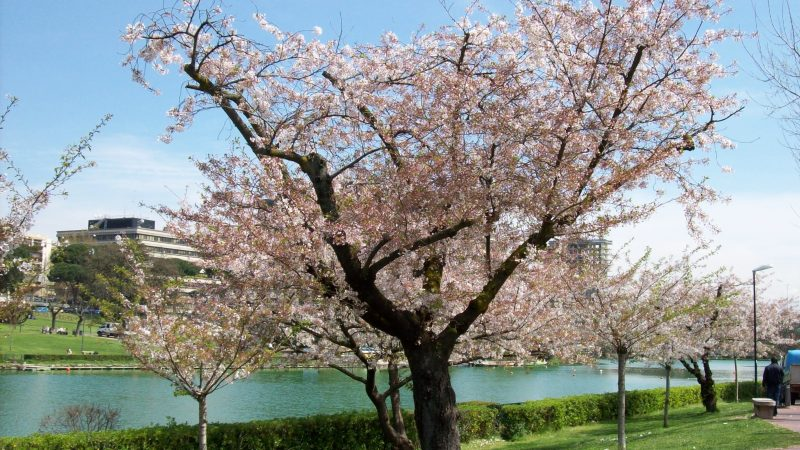 La manifestazione dei Giardini Giapponesi: ecco tutte le informazioni