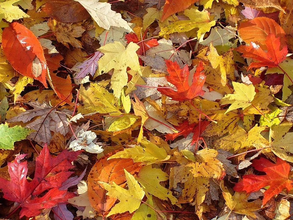Allerta meteo: inizia l'autunno a Roma?