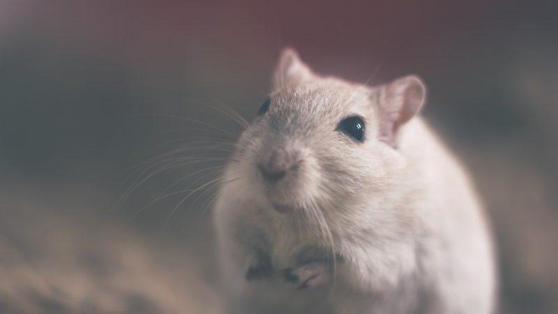 Totti e la caccia al topo