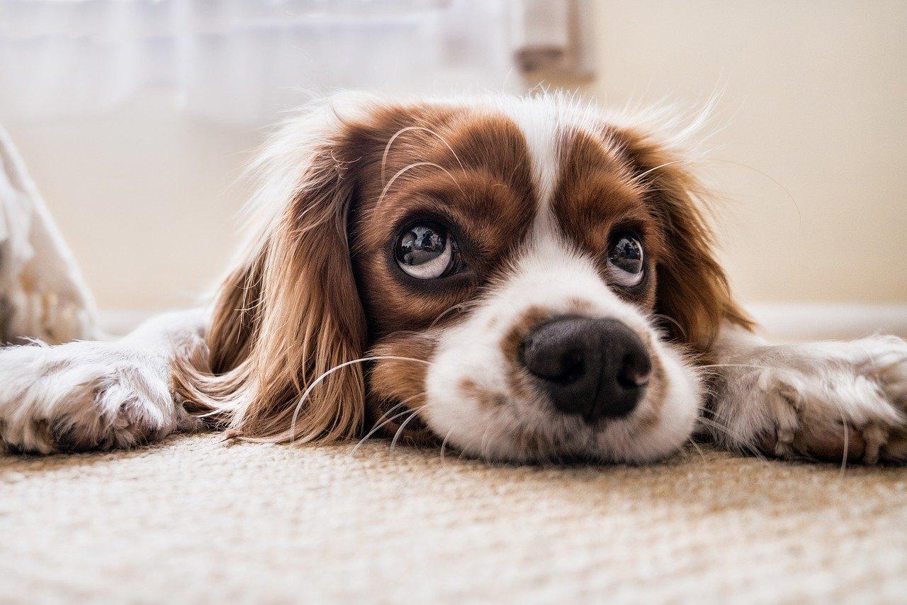 Come aiutare i cani la notte di Capodanno?